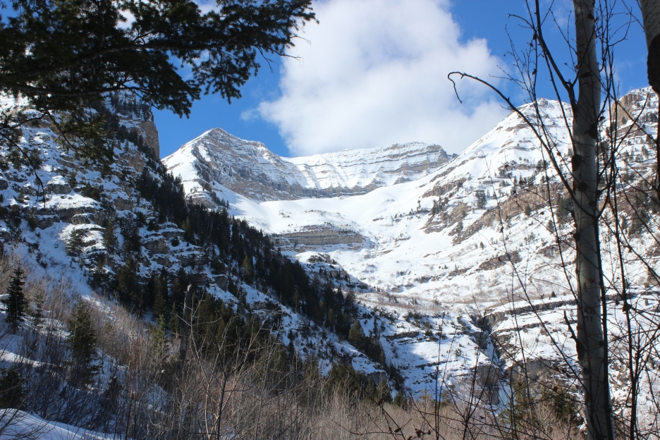 Living like a Mountain – The Life of Briggs